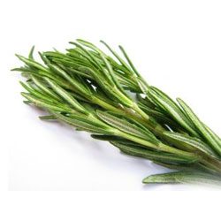 benefits of rosemary essential oil for hair