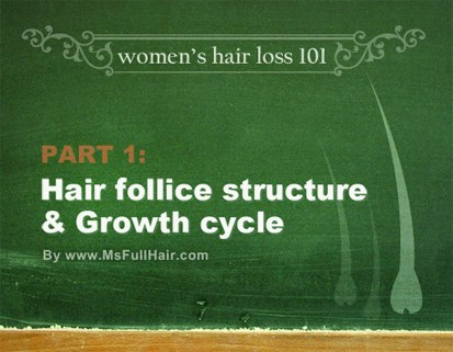 Hair follicle structure and hair growth cycle