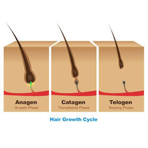 Image: Hair Growth Cycle