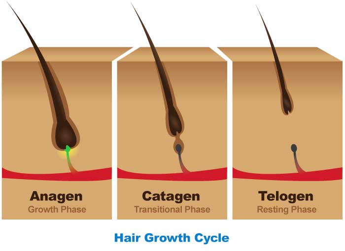 Women S Hair Loss 101 Hair Follicle Structure And Hair