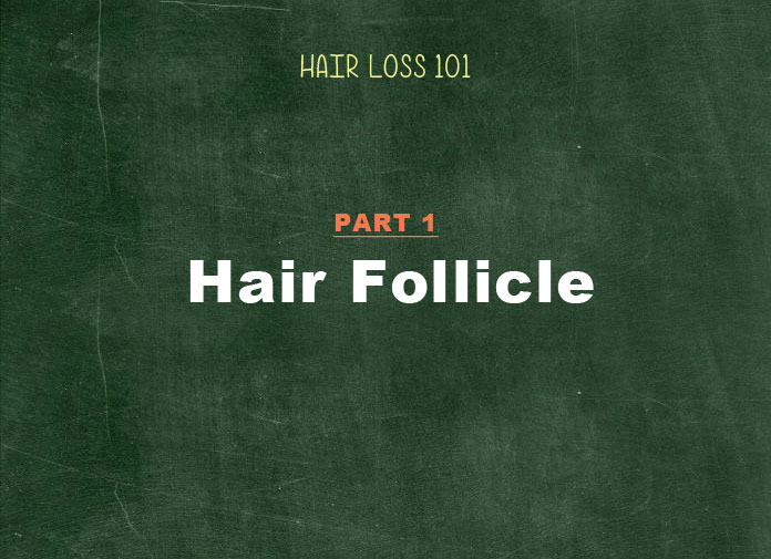 hair loss 101 hair follicle structure and growth cycle