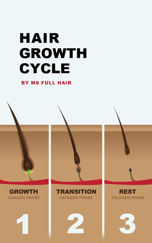 hair growth cycle photo image