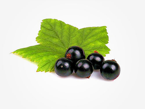 Black Currant Oil for Hair Loss Reviews – Study Shows Amazing Benefits