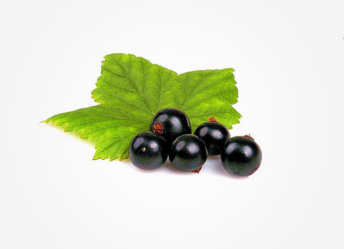 dr oz black currant oil hair growth for thinning hair