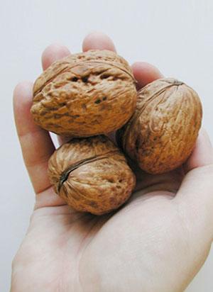 dr oz hair growth foods walnuts
