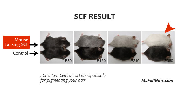 hair pigmentatoin stem cell factor hair regrowth research