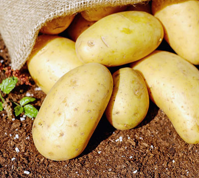 the best foods for hair loss hair fall out potato skins edgar cayce