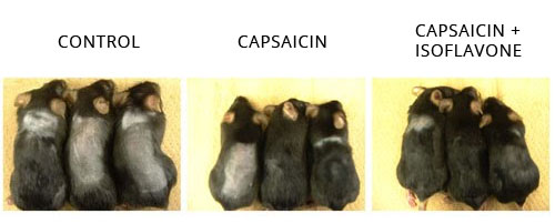 soy capsaicin for stimulating hair growth research
