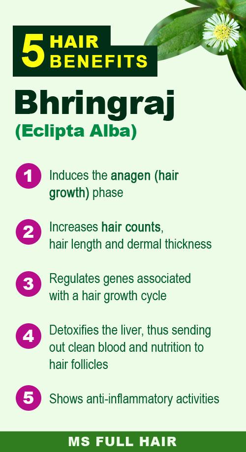 bhringraj oil brhingraj powder benefits for hair