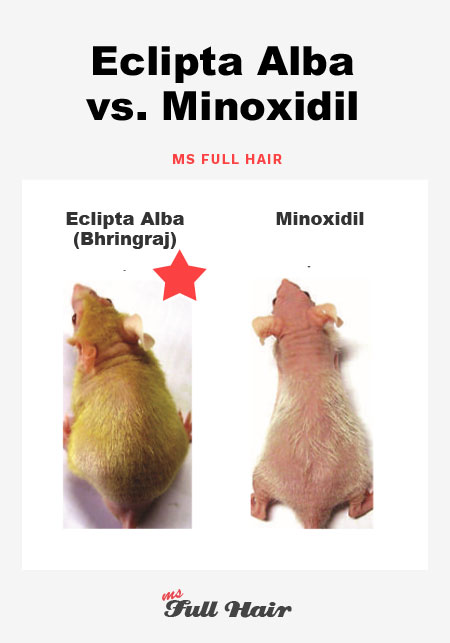 eclipta alba bhringraj vs minoxidil
